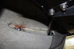 3-13-13 rear bumpers 7 sm